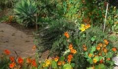 טיפוח הגינה – איך תוכלי להספיק גם את זה?