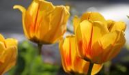 משלוחי פרחים ברמת גן